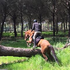 ride horses in donana el rocio matalascanas