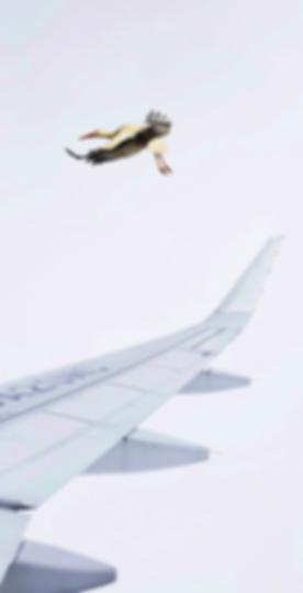 Wingtip3.png