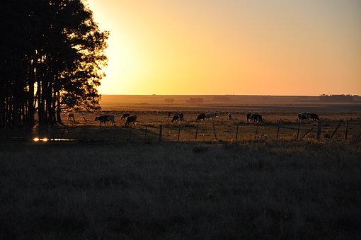Beautiful estancia sunset in Uruguay