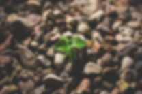 leaf.116145002_std.png