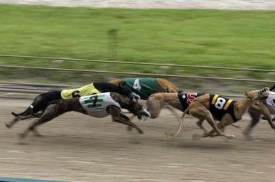 Flagler Dog Track.jpg