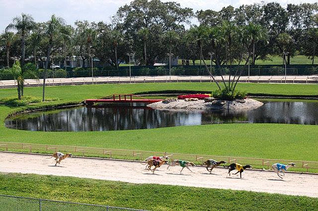 Palm Beach Greyhounds