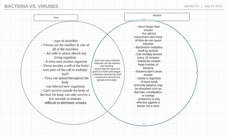 Venn Diagram Of Viruses And Bacteria Vatozozdevelopment