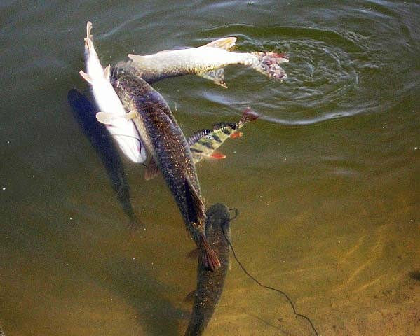 рыбалка в сестрорецком разливе с какова числа