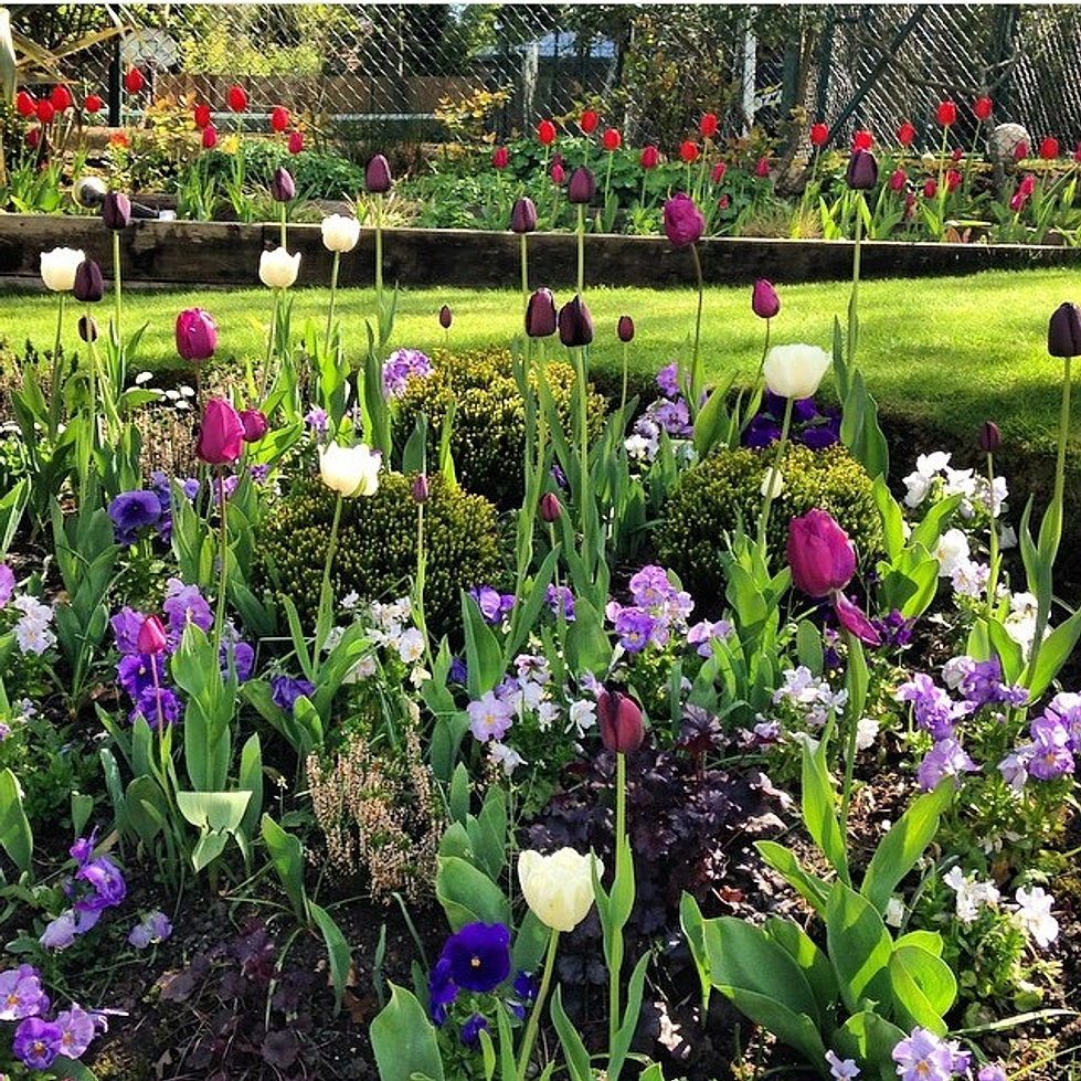 Planting schemes north london for Planting schemes for small gardens