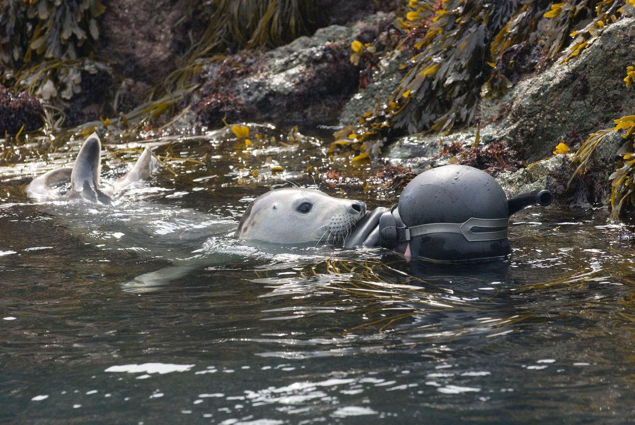 orques sans frontieres