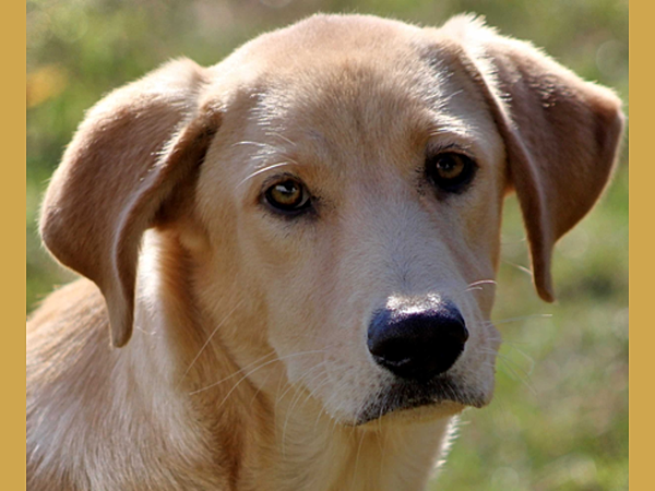 Assistance Dogs Of Texas