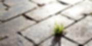 sustentabilidade-768x384.png