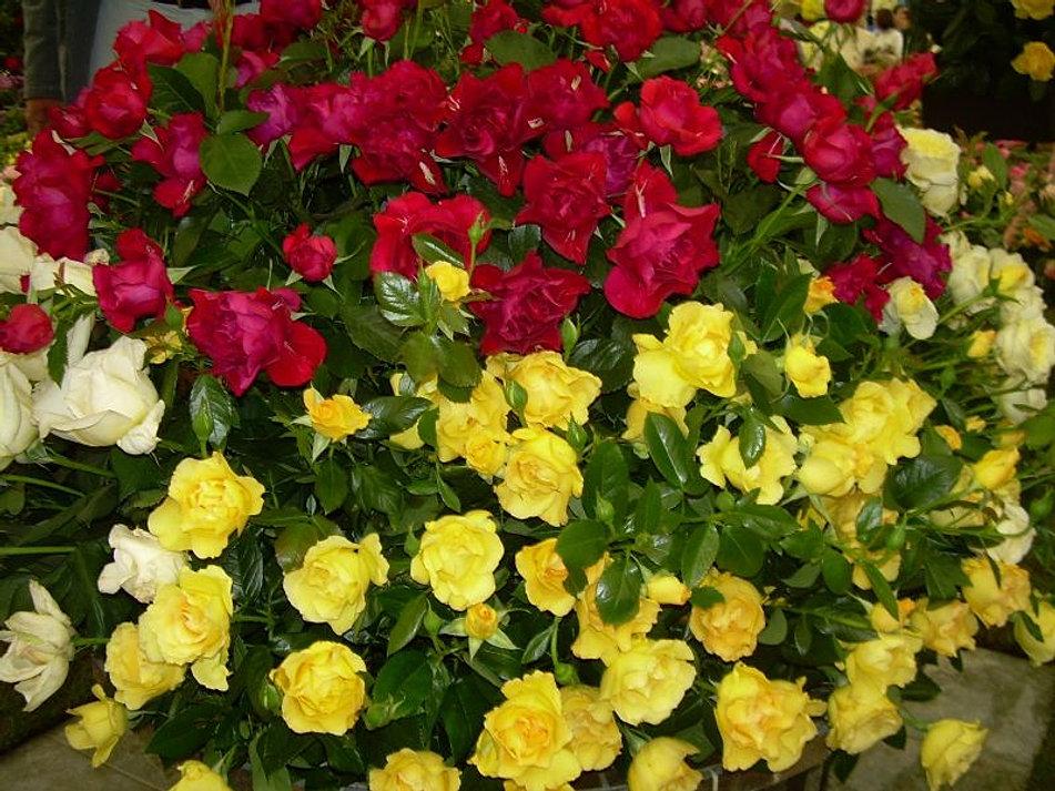 Plante care aduc noroc și bunăstare