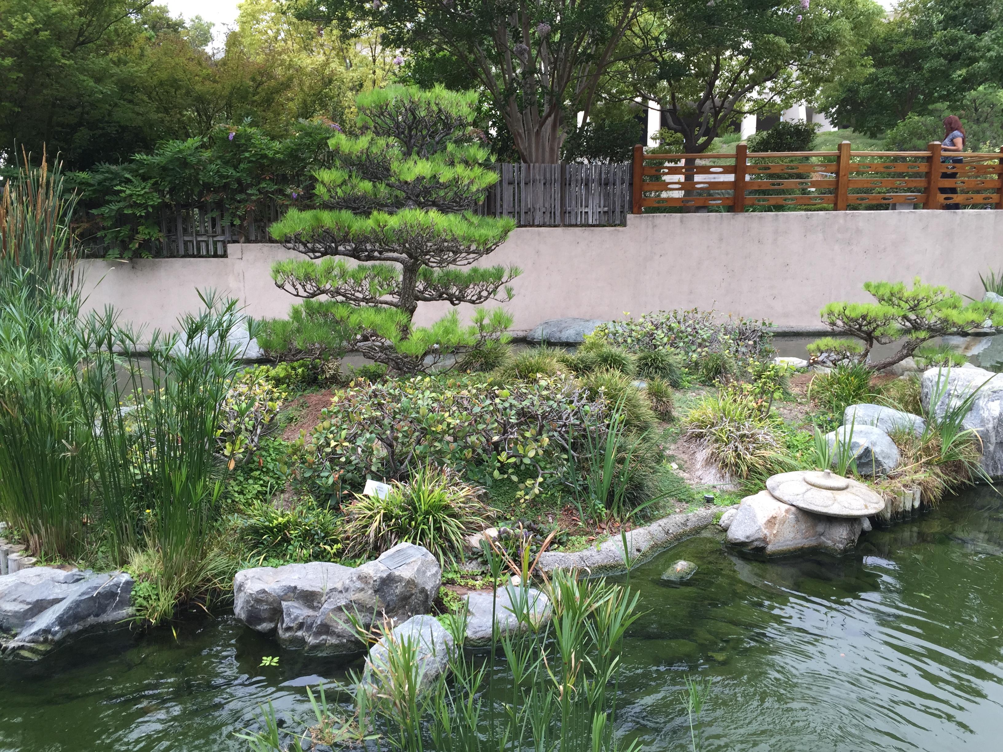 Japanese Garden Cal Poly Pomona Bonsai Club Los Angeles Trees Los Angeles Baikoen Bonsai