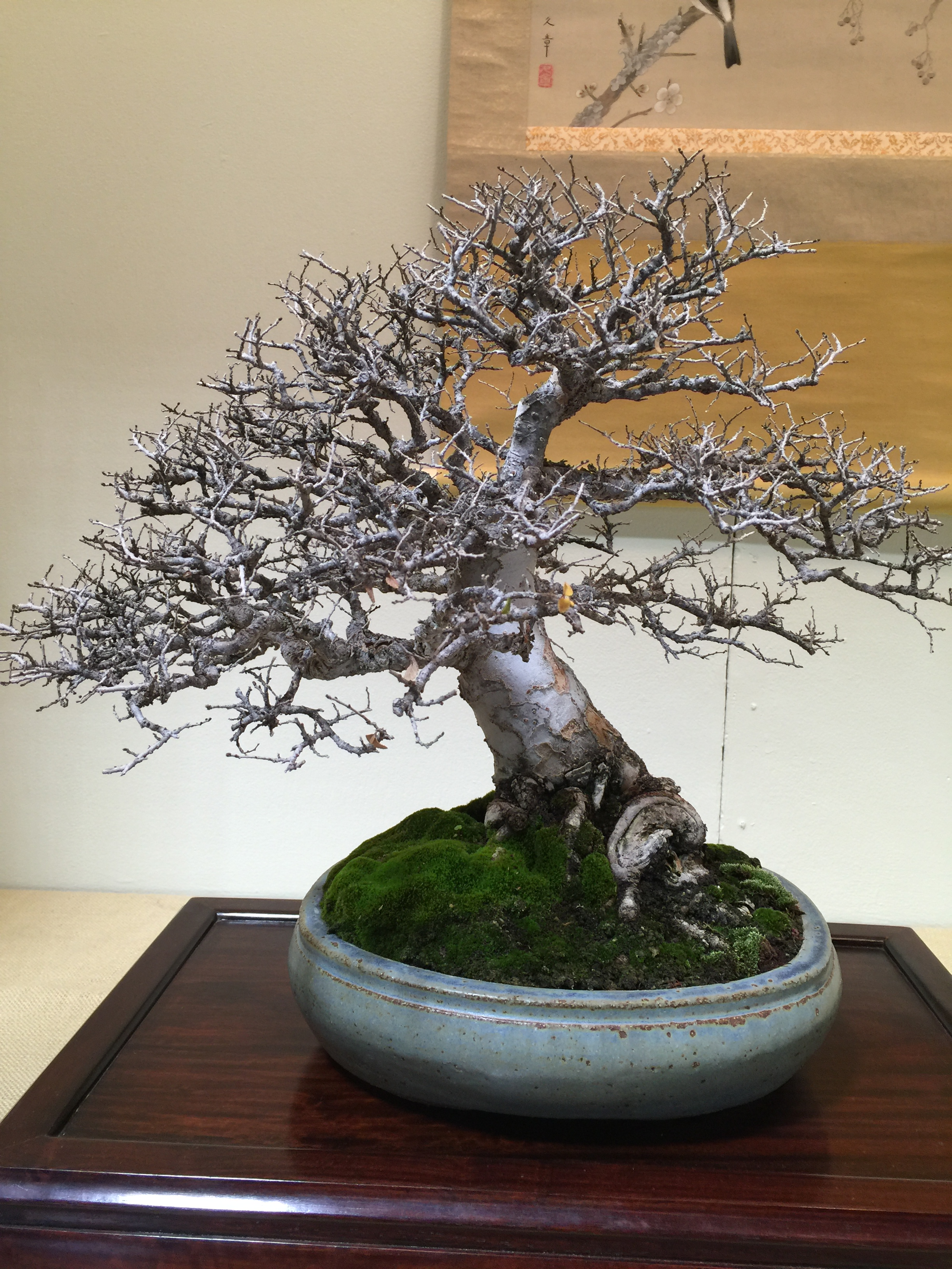 Winter silhouette show 2017 bonsai club los angeles trees los angeles baikoen bonsai for Cal expo home and garden show 2017