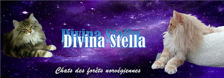 divina-stella.jpg