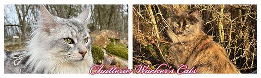 wacker's cats.jpg