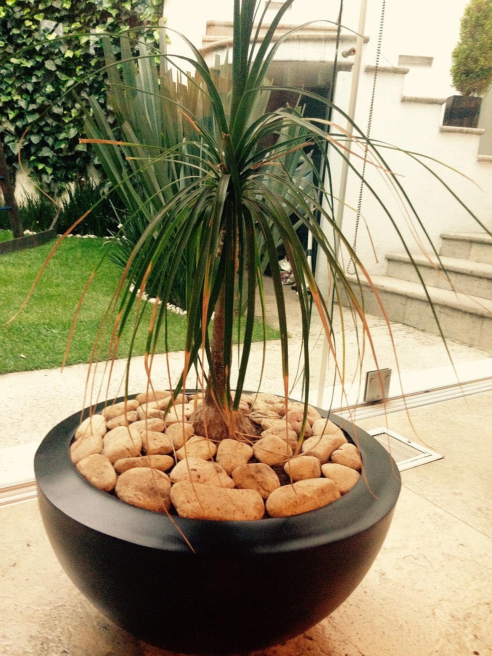 Decoracion con macetas i macetas baratas i macetas online for Adornos para macetas
