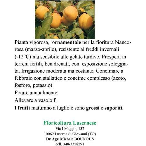 Piante Da Frutto Antiche : Piante da frutto
