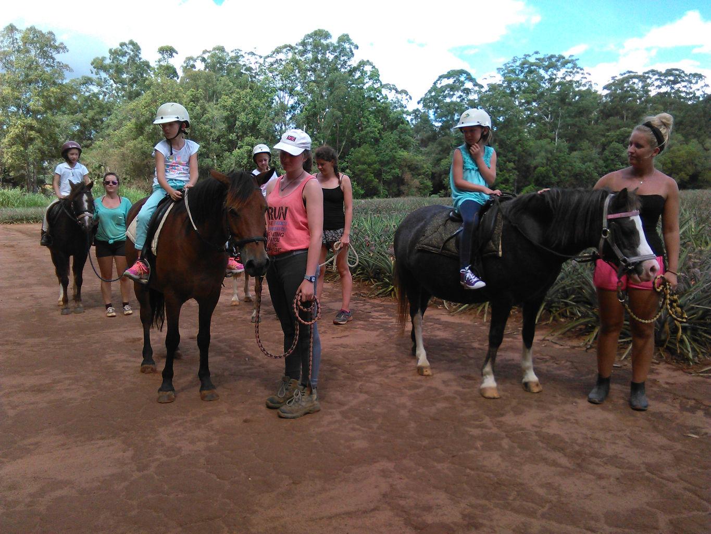 Horse riding glasshouse mountains