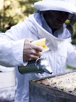 養蜂家.jpg