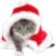 FCHS Christmas-cat.png
