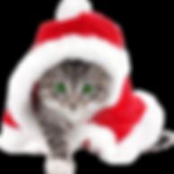 FCHS Christmas-cat.png