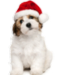 FCHS Christmas-dog.png