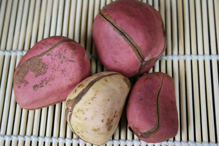 kola nuts Kola nuts may be a helpful natural remedy for some common conditions however, as they contain substances that act as stimulants on the body.