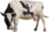 животные на мясной круг-2.png