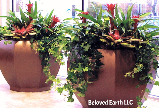 We Design, Install And Service Interior Plants For Businesses Like Yours.  We Also Barter Plant Maintains Services With Select Merchants In The Pikes  Peak ...