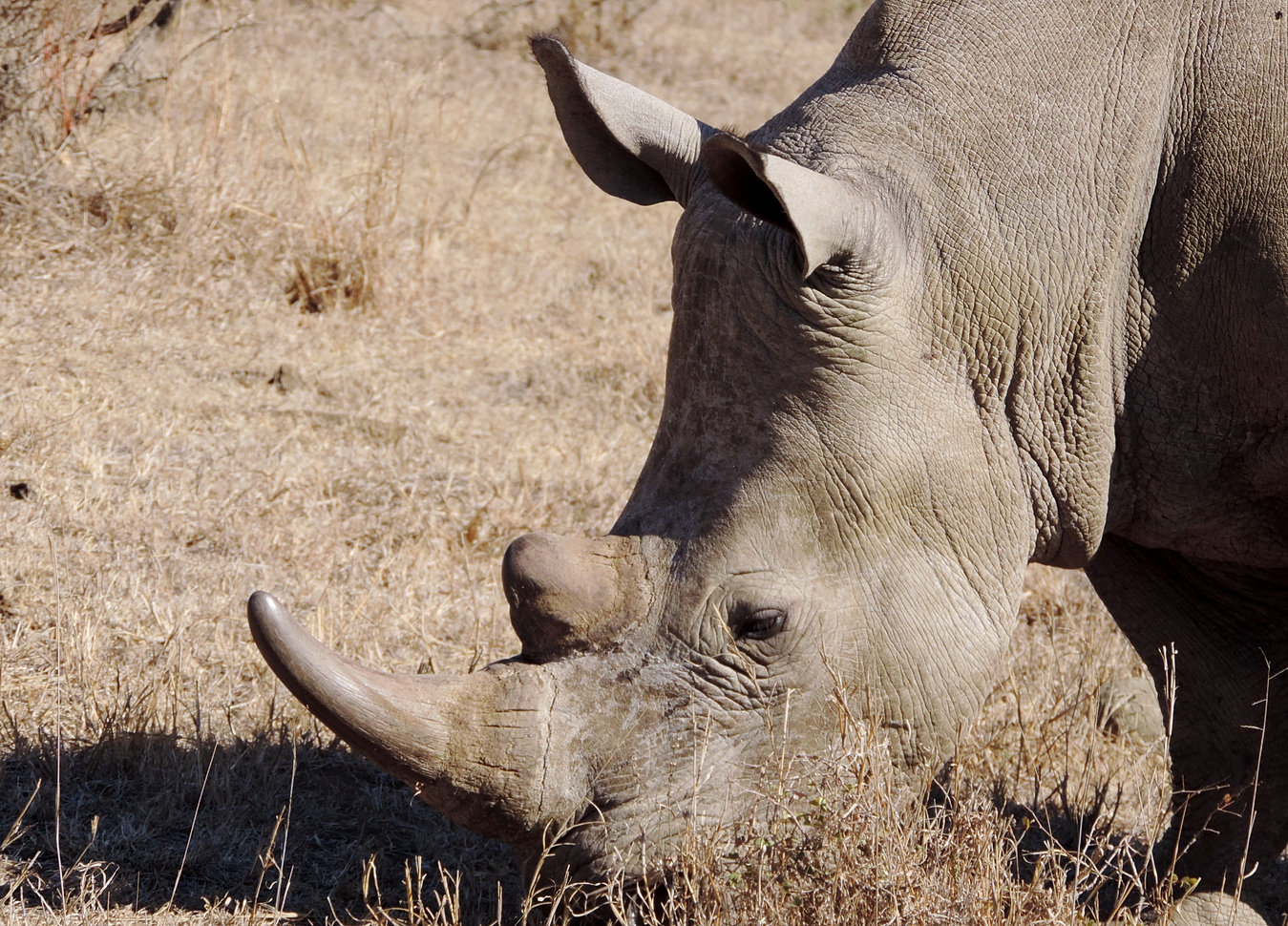 south africa self guided tours