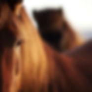 horse img.jpg