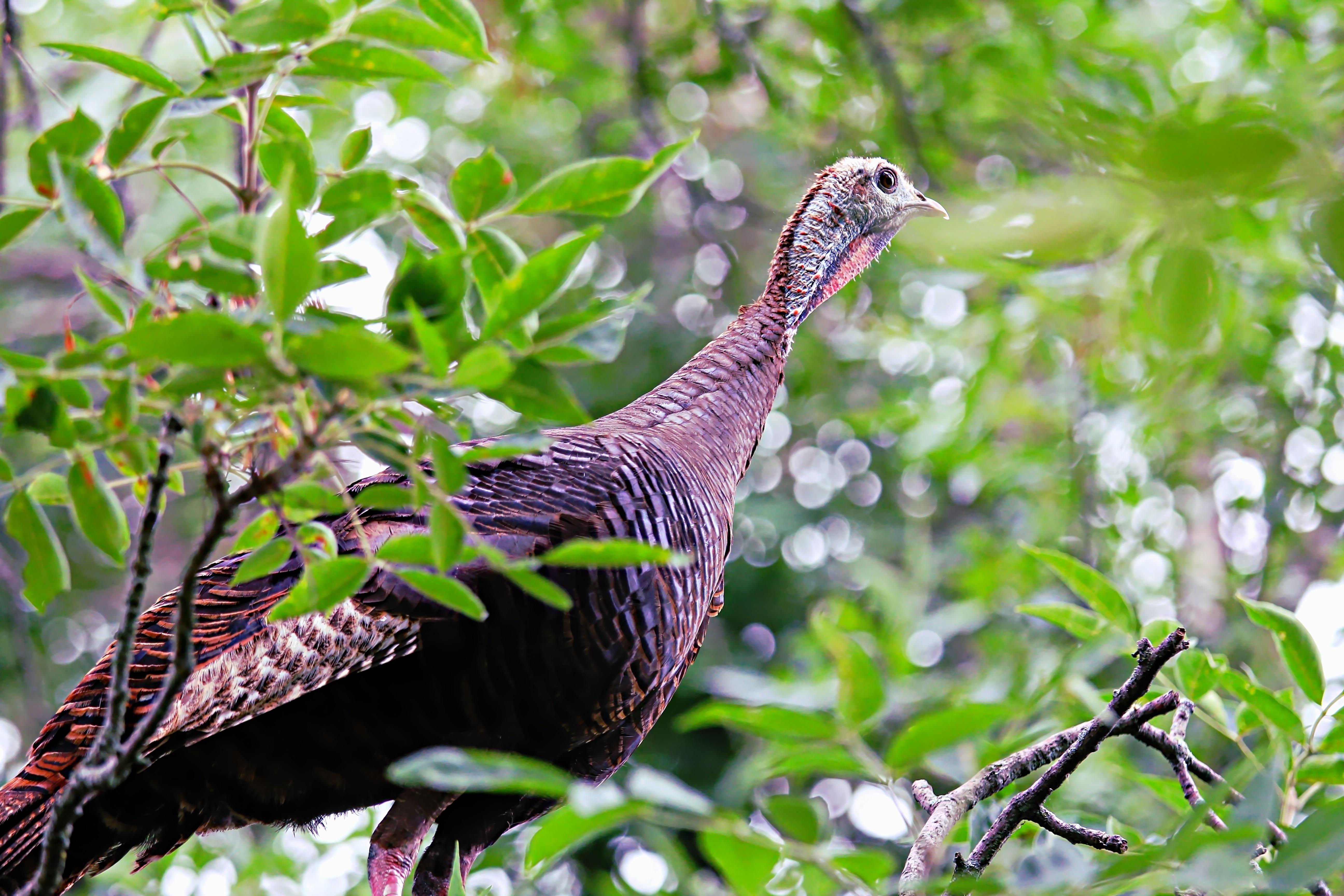 Cottage Rentals Ricelake Ontario Turkey