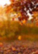 Fall-Season.jpg
