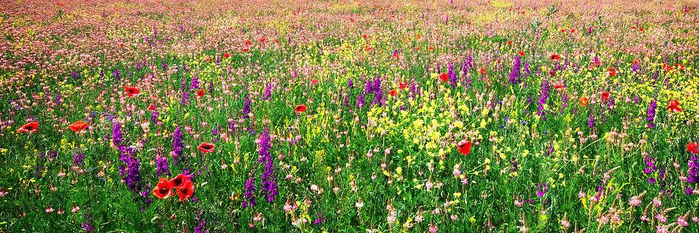 meadow_edited.jpg