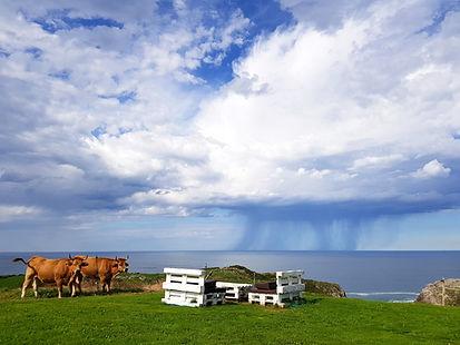 Costa Llanes Vacas editado