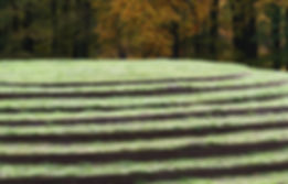 Vlindertuin Park Sonsbeek