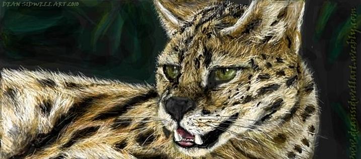 Savannah Cats and Savannah Kittens for Sale by Top Savannah Cat Breeders.
