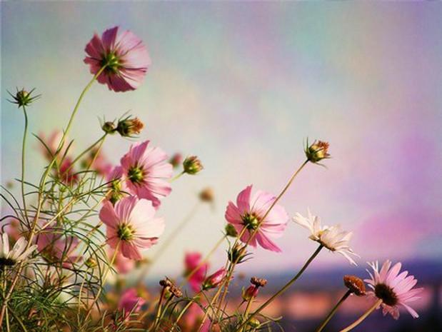 Resultado de imagem para flores ao vento