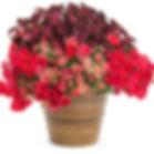 aranjamente-florale-gradina