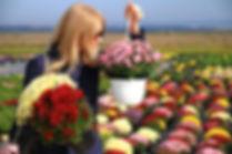 Flori de Gradina de Toamna
