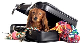 boarding-dog_edited.jpg