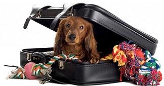 boarding-dog.jpg