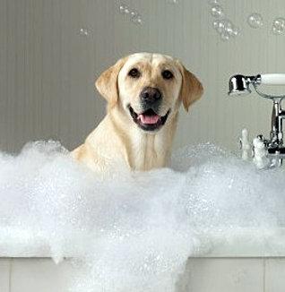 dog-batch.jpg