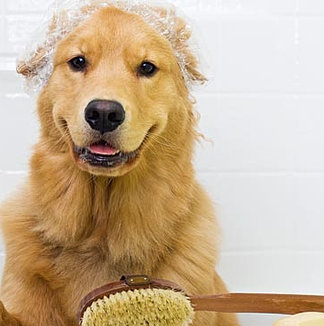goldenretriever.jpg