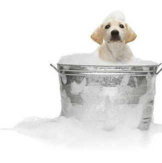 k-9-kuts-weston-dog-groomer-dog-in-bath.jpg