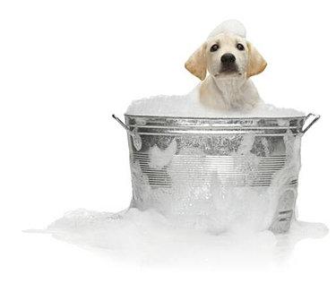 k-9-kuts-weston-dog-groomer-dog-in-bath.jpg
