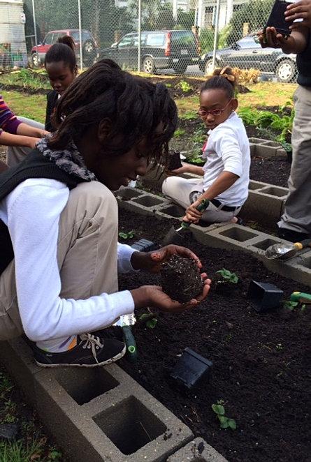 strawberryplanting2.jpg