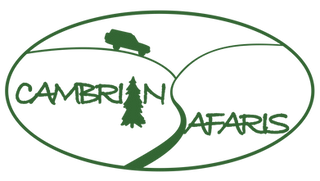Cambrian Safaris logo