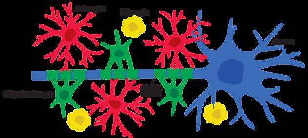 glial cell