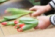 Tulpenzucht: Die Produktions- und Arbeitsprozesse werden regelmäßig kontrolliert.