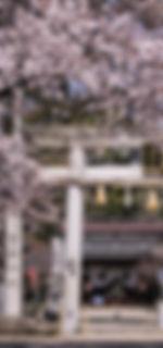 富部神社, 桜, 鳥居