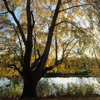 arbres.jpeg